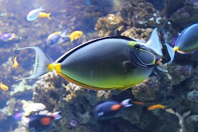 Der Diva-Fisch