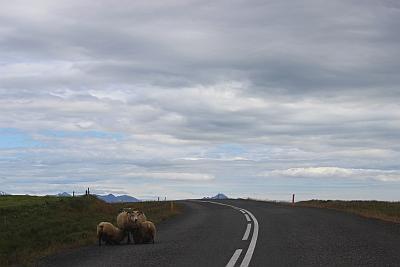 Szenen auf Islands Hauptstrasse