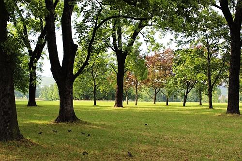 Spaziergang im Rosensteinpark